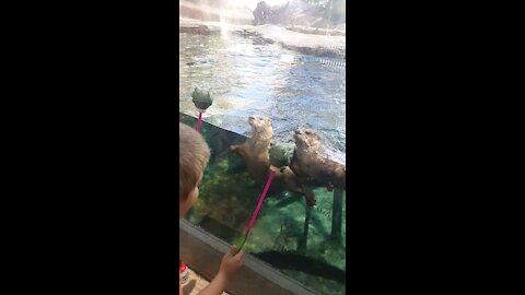 Dizzy Otters