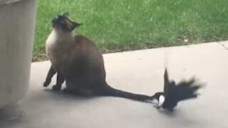 Bird won't leave cat's tail alone!
