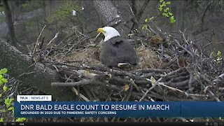 DNR hopes to continue annual bald eagle count after 2020 postponement