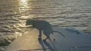 Dog photobombs sunset scene in hilarious way