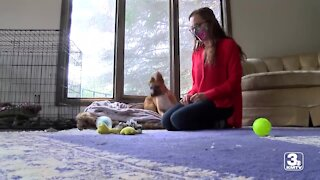 Omaha woman fostering animals despite pandemic woes