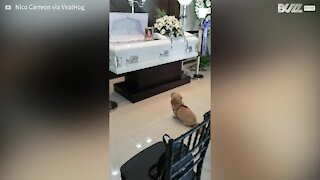 Heartbreaking moment dog mourns owner's death