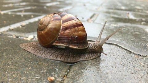 When Snail Walking 4K Video