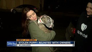 Puppy reunited with family after carjacking
