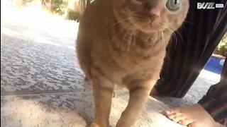 Un chat hypnotisant avec ses grands yeux
