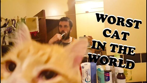 He Is Troy, The Worst Cat In The World