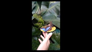 A huge amazing butterfly sat on your hand!