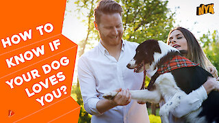 Top 5 Signs Your Dog Loves You :) :)