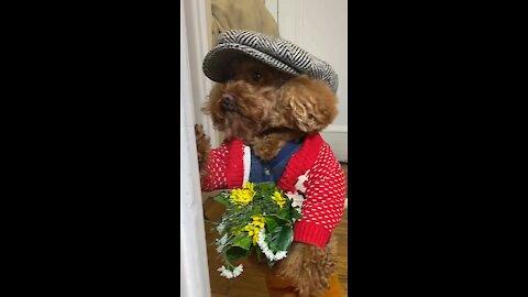 Funny puppy winter fashion looks