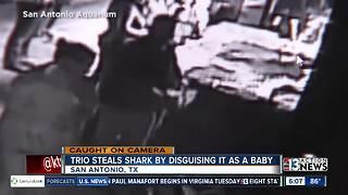 Theft of shark caught on camera