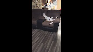 You won't believe how this dog is relaxing!