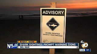 Shark sightings prompt warning signs at San Diego beaches