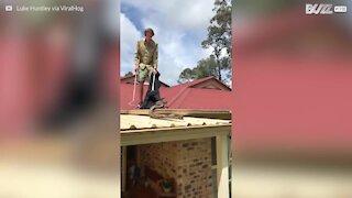 Australia: catturato serpente gigante sul tetto