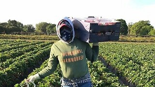 Farmworker Advocates Push For Federal Protections Amid Pandemic
