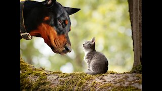 Cats and dogs having a fun time, Nice pets.