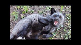 Emmie Fox plays fetch