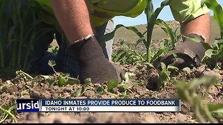 TEASE 1: Prison program provides produce to Idaho Foodbank