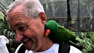 Amorous parrot lands on tourist's shoulder and refuses to leave
