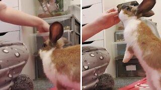 Adorable bunny loves doing tricks for tasty treats