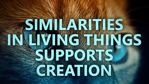 Similarities in living things supports creation