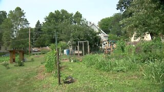Urban farmers, nonprofit growing food forest in Benson