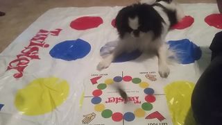 Animals with Interesting Hobbies   Funny Pet Videos Compilation