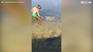 L'incredibile amicizia tra un bimbo e un pesce gigante