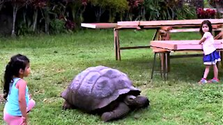 Young girls receive a visit from gigantic Galapagos tortoise
