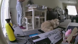 Dog clears box from his bed with a kick