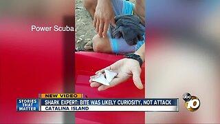Shark expert: Catalina bite was likely curiosity, not attack