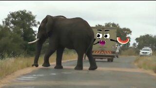 Elephant Thugs attack vehicles