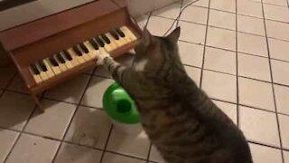 Gato toca piano para pedir comida!