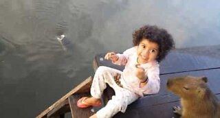 Liten jente og flodsvin samarbeider om å mate fisk
