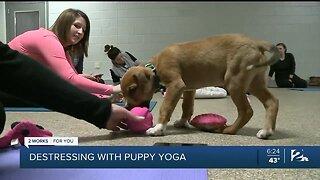 Destressing with Puppy Yoga