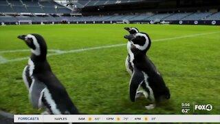 Penguins visit Chicago Bears