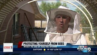 Staying safe around bees in Southern Arizona