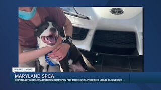 Woodstock the dog is up for adoption at the Maryland SPCA