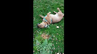 Itchy dog can't stop scratching in nature
