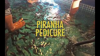 How Would You Like A Piranha Pedicure?