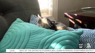 Positively the Heartland: Local woman helps foster hundreds of animals