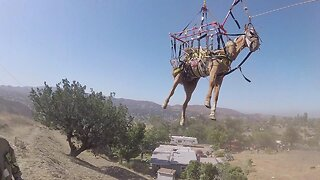 Helicopter rescues horse that fell down steep hill