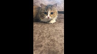 Cute cat playing with mouse and afraid of itself 💕