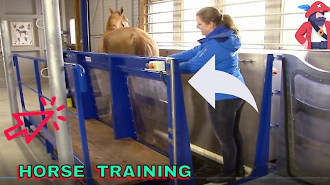 HOW DO THEY TRAIN HORSES TO RUN ON WATER ? AWESOME MACHINE!!!!!