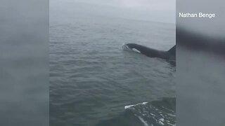 Fishermen encounter orca off San Diego