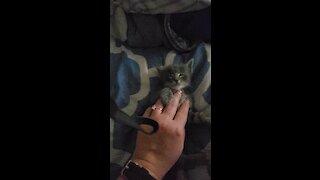 Kitten enjoy massage