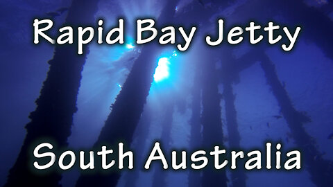 Freediving Rapid Bay Jetty, South Australia