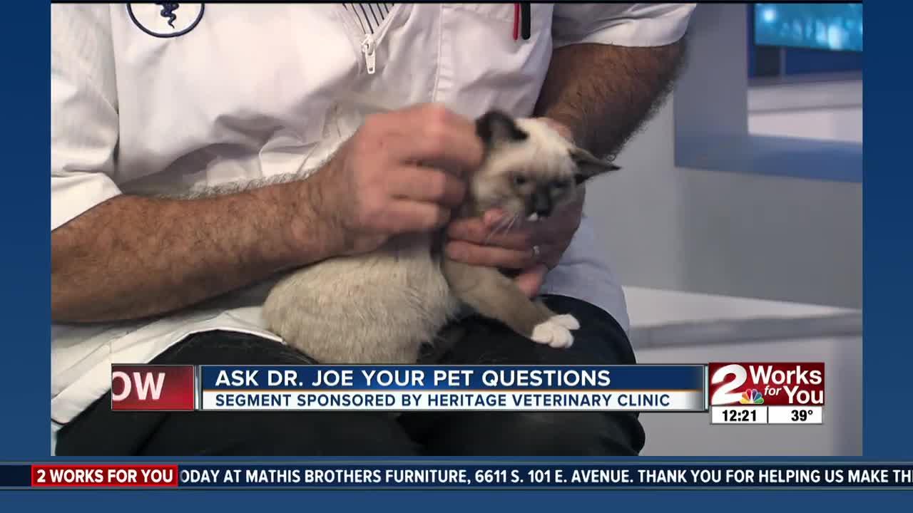 Ask Dr. Joe: Meet Annie