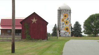 Sunflower mural decorates old silo in Silver Springs