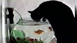 Kitty gets a Drink in an Unusual Spot