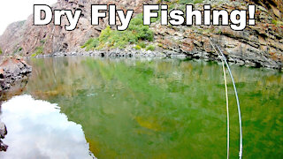 Gunnison River dry fly fishing - Beautiful Wild Trout - Black Canyon - McFly Angler Episode 28